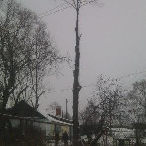 Опиловка дерева в Тульской области