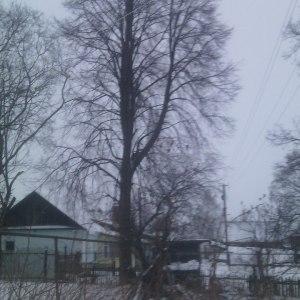 Кронировние деревьев в Тульской области