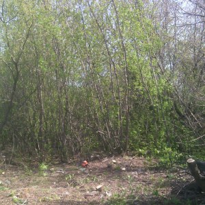 Очистка территории от деревьев