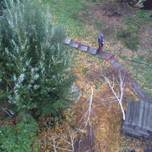 Опиловка деревьев в Туле