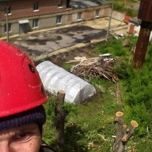 Обрезка деревьев на частном участке