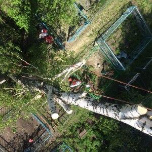 Спил деревьев с отттяжкой