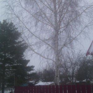 Срезание веток деревьев в Тульской области