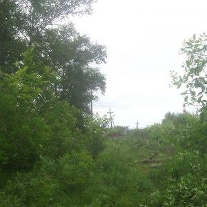 Расчистка территории от деревьев