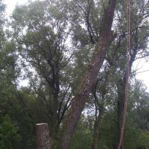 Спиливание дерева по частям