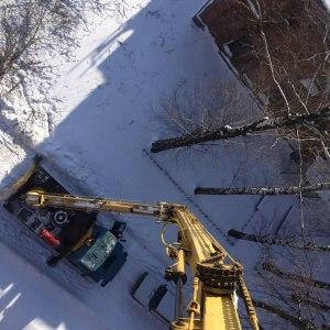 Кронирование деревьев в Тульской области