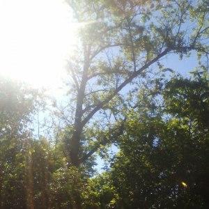 Спил дерева с естественным наклоном