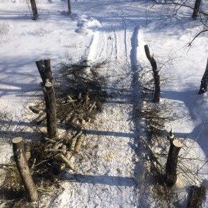 Спил деревьев по частям