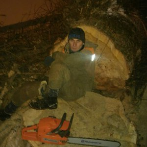 Спиливание деревьев в Туле