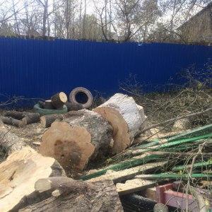 Спиливание старого дерева