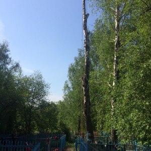 Спил дерева с завешиванием ветвей и фрагментов ствола на грузовой веревке