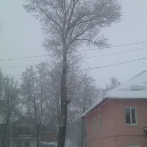Опиловка дерева у дома в Тульской области
