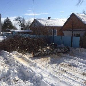 Вырубка дерева в Тульской области