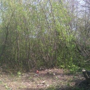 Расчистка участка от деревьев и пней