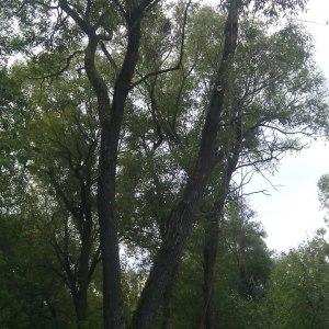 Расчистка территории от деревьев в Тульской области