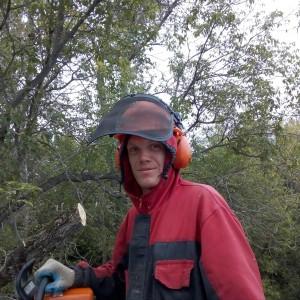Кронирование деревьев в Туле