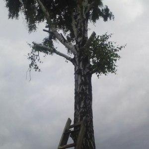 Обрезка и кронирование деревьев