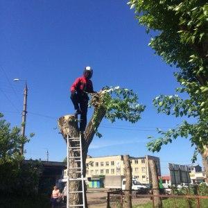 Удаление опасного дерева в Туле