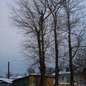 Сруб и опиловка старых деревьев в гаража в Тульской области