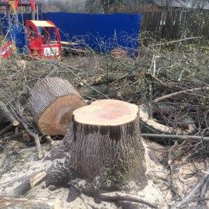 Спил дерева в Туле
